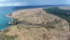 650 bin ağaç kesilmişti! Japonya, Sinop nükleer santralinden vazgeçiyor