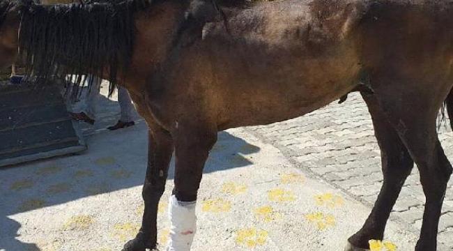 Mardin'deki kazada bacağı parçalanan atın bakımı İzmir'de yapılıyor