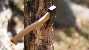 Marmaris'te doğa katliamı: Milli Park'taki ağaçları kestiler!