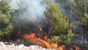 Buca'da yanan samanların alevi ormana sıçradı