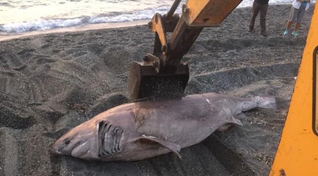İzmir'de sahile köpek balığı vurdu
