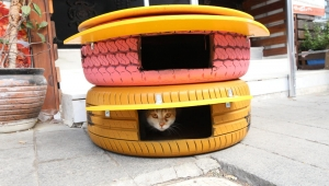 Konak'ın kedileri bu kış üşümeyecek