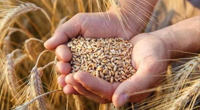 AKP, buğday ithalatında Cumhuriyet tarihinin rekorunu kırdı!