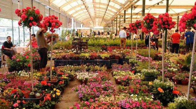 CHP'li Sertel: Çiçekçilik sektörüne acil destek sağlansın