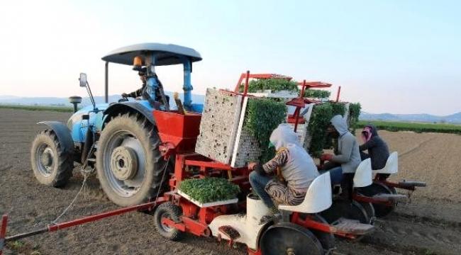 Foça'da üreticiler gıda sıkıntısı yaşanmaması için tarlaya indi