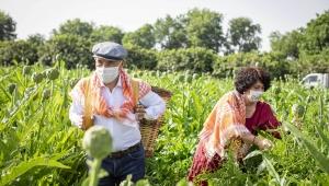 Çiftçiler Günü'nde Başkan Soyer sırtında küfeyle enginar hasadına katıldı