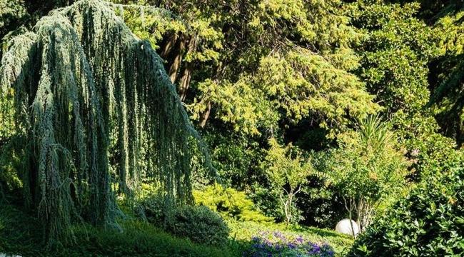 Diyanet'i üzecek karar: İthal ağaç vergisi arttı