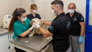 İzmir'de bir yılda 11 bin 500 sokak hayvanı tedavi edildi