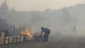 Söke'de bilanço ağır: 150 hektarlık ormanlık alan kül oldu