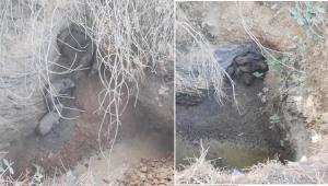 Menderes'te kurtarılan yavru domuzlar doğaya bırakıldı