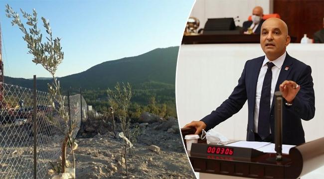 CHP'li Polat: Ağaç diken elleri öpüyorum