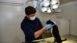 Narlıdere'de 4 ayda 3 bin 782 sokak hayvanı tedavi edildi