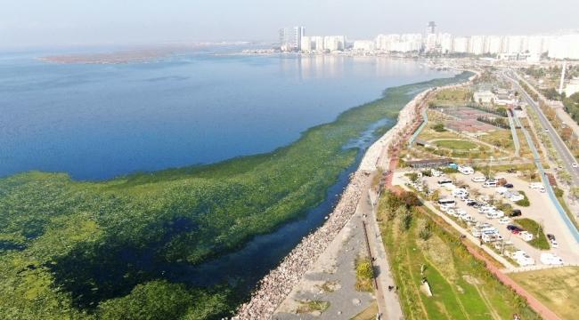 İzmir Körfezi'nde kirlilik ve müsilaj tehlikesi: 'Ciddi bir boyuta geldi'